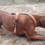 Ein erhöhtes Erregungslevel bei Hunden