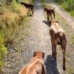 Mehrhundehaltung vs. Einzelhund